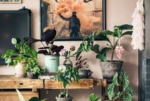 Garden: potted plants / Plants that grow in pots + hanging plants