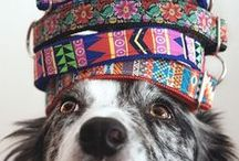 Gifts for Pets / Gifts, treats, and accessories for dogs, cats, hamsters, and budgies, curated from Shopify stores worldwide.
