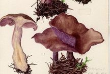 Diagrams & Art - Biodiversity / Illustrations and diagrams of the natural world.