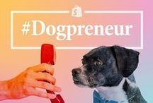 Dogpreneurs / Shopify has gone to the dogs! We're honouring working dogs, everywhere: pups who inspire their human counterparts to start businesses and provide moral support every day. / by Shopify