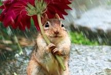 Fuzzy Cuteness ✨ / The Fuzzy Cuteness board is EVERYTHING!