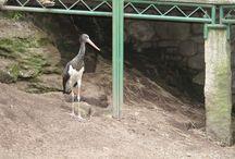 Nuestras aves / Avifauna tiene más de 500 aves de 240 especies diferentes, 40 de ellas en peligro de extinción.