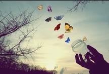 Butterflies Flying Free