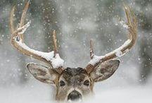 --- WINTER WONDERLAND --- / by Andrea Bahls