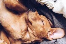 Love: Puppies