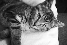Tally cat. / Tally the kitten. Born 20th April 2015. She loves the camera.  / by Julie Mariner