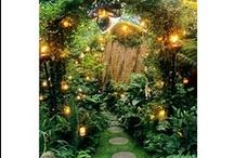 Jungle / by Hayley Harris
