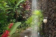 Aquarian garden