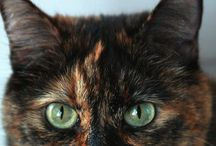Here Kitty Kitty... / Kittens & cats...with attitude / by Gail Dennison