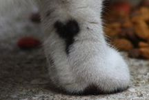 PaWsitivLey PURRRfeCT  / I luv all your lil features ~ paws, whiskers, eyes and lil nose