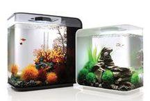 Aquariums / Cool new aquariums.