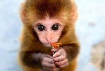 Si-monkey / by Stephanie Bramasco