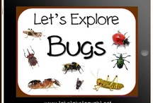 Bug/Insect Theme / Activities and ideas for a bug or insect unit / by Homeschool Creations