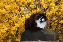 Cats in the Garden / by Terri Ann