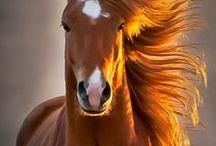 Quit horsin' around / by Stephanie Bramasco