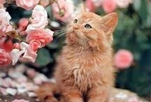 Cats Domestic / Here kitty kitty. Cats and kittens of all types and sizes can be found here.