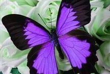 Butterflies / The variety of the vivid colors of the fluttering butterfly.