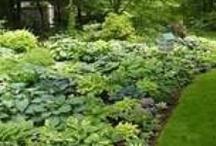 Gardening/ Trädgård och blommor / by Johanna Westring