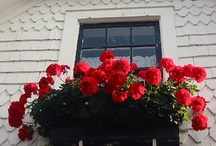 Flower+ Window Box...