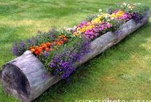 GARDENING / Gardening, planting seeds & bulbs, gardening ideas, flowers, vegtables, bird baths, fertilizers, bug repellants, yard deco / by Lorie Mailhot
