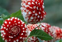 Flower+ Bloom