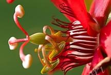 Flower+ Up Close