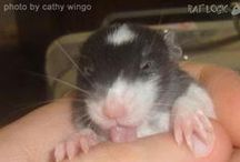 cute rodents
