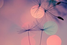 Pencil paint and lens / Pretty as a picture / by Victoria Morgan