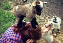 Fur-babies / by Dianna Meyer