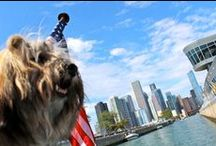 Our Chicago Cruises / Join us for a Chicago River and Lake Cruise! Cruises for every age and interest - 3-D fireworks cruise, canine cruise, city tours and more! www.mercurycruises.com