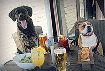 Dog-friendly Chicago Restaurant Patios / Chicago loves its many canines and restaurant patios all over the city are welcoming its customers' four-legged friends. Check out our list of dog-friendly eateries within walking distance to our dock (Michigan & Wacker)! Know a restaurant that should be on this list? Email us at MercurySM@cruisechicago.com!