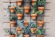 No. 10 | Garden / Flowers + Foliage + Foodie Plants