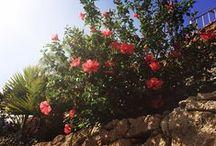 Villa María Flora & Fauna / Nuestro pueblo-hotel está lleno de especies naturales, muchas de ellas autóctonas canarias. ¡Descúbrelas! ***** Our village-hotel is full of natural life, most of them native species from the Canary Islands. Find them out!