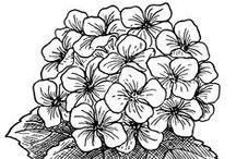 Coloring pages >> Flowers / by Bernadette Kay Post Nierman