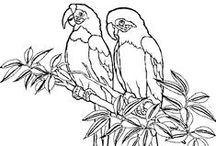 Coloring Pages >> Animals / Anything with 2 or 4 legs that walks or flys. / by Bernadette Kay Post Nierman