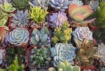 wish I had a garden!