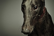 Love me some GREYHOUNDS. / by Lisa Edge