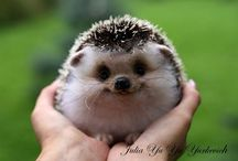 Squish to death / baby animals you just want smash to death. / by Scott Howard