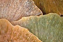 Texture / by Melinda Barnett