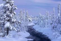 winter / by Jennifer Konie