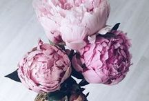 Flowers / I want them to always be on my kitchen table!