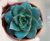 Plant love / plants, succulents, green, eco,