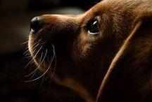Puppy Luv / by My Rosie Cottage