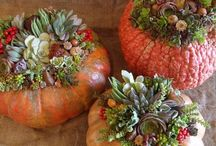 Fall / container design and display inspiration / by Chris Hofer