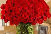 ~Valentine's Day~Romance~ / by Lauren Knightsbridge