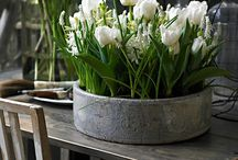 Spring / container design and display inspiration  / by Chris Hofer