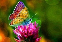 Butterflies / by Launa Smith