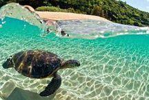 Turtle stuff <3