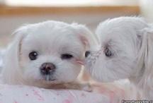 Doggies! / by Rachel Petros