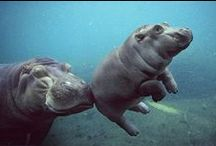 Hippos are my favorite. / by Haley Bowers